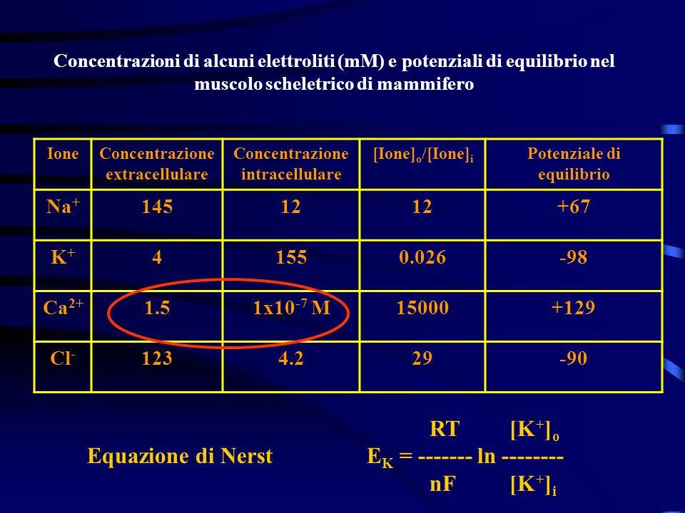 Equazione di Nerst EK = ------- ln -------- nF [K+]i
